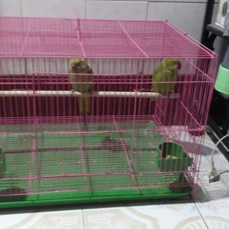 ကြက်တူရွေးလှောင်အိမ်အပါ Image, အိမ်မွေးတိရစ္ဆာန် classified, Myanmar marketplace, Myanmarkt